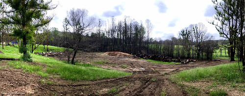 After the Rumba Dump Fire, Bobin, West of Wingham, NSW