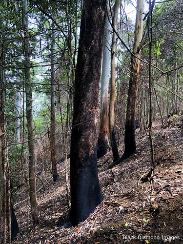 Upslope Burning - Oxygen Farm, Elands, Bulga Plateau, NSW