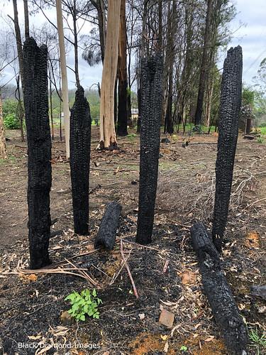 Destruction Following the Rumba Dump Fire, Bobin, West of Wingham NSW 8th November 2019