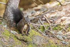 Cute squirrel posing