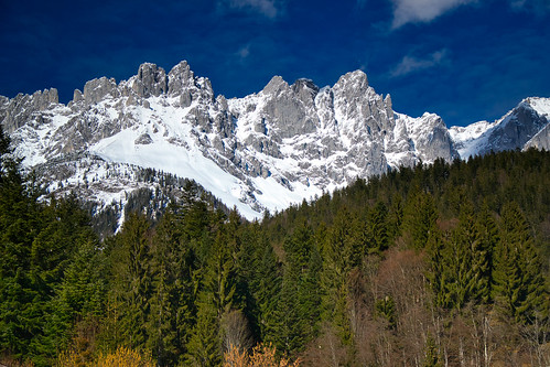The forest and the snow-covered Wilder Kaiser