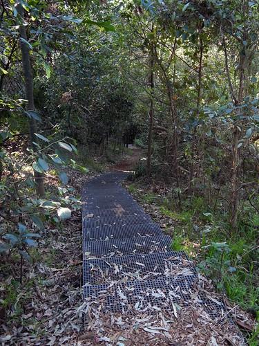 Brush Farm Park Track, Eastwood, Sydney, NSW.