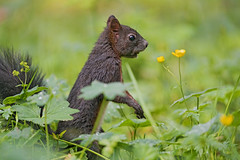 Squirrel standing in the grass
