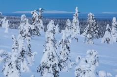 Riisitunturi, Finland