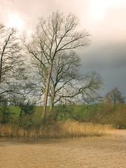 Brauner Teich durch Wind | 12. März 2020 | Schleswig-Holstein - Deutschland