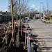 12-03-2020 Aanplant laatste bomen aan Oude Wisselseweg