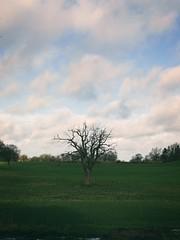 Alter Baum | 12. März 2020 | Schleswig-Holstein - Deutschland