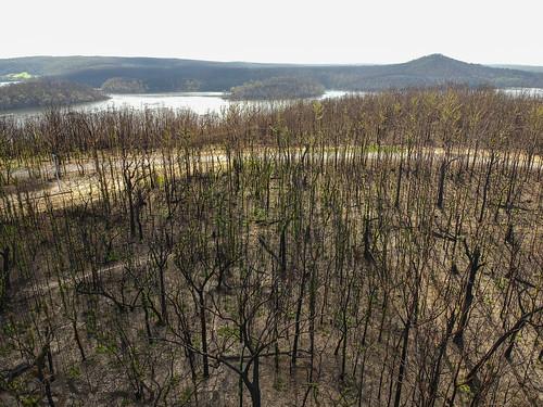 Bushfire afermath