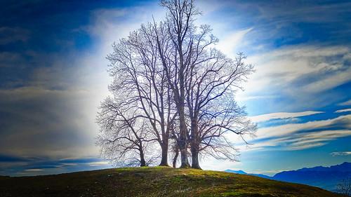 Baumgruppe am Hügel - Trees on the hill