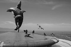 Dolphins & Pigeons - Delfines y Palomas