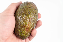 Whole Avocado in the hand above white background with copy space