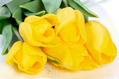 Close- up of yellow tulips with water droplets