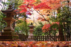 Konpira Park Autumn