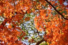 Nagasaki's autumn