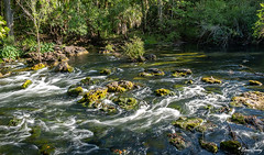 Hillsborough River State Park, FL 2020