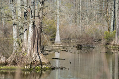 Stumpy Lake 14 Mar 2020 -3