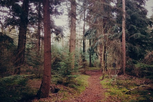 forest 🌲🌲🌲🌲