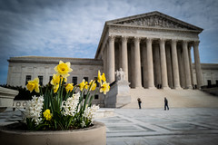 Springtime at SCOTUS