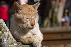 貓咪 Cat ねこ