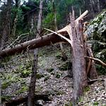 Wie stark ist ein Baum ? / How strong is a tree ?