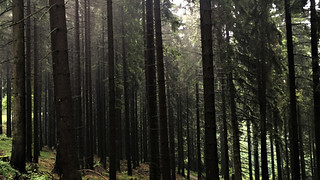 Winterberg spruce forest
