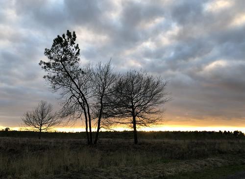 Coucher du soleil sur la forêt landaise