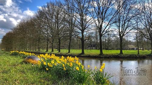 Spring flowers, Kasteel Sterkenburg, Driebergen, Netherlands - 3288