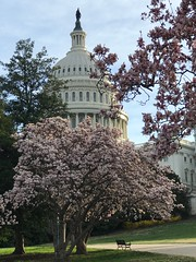 Capitol Hill in Spring