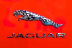 Jaguar company logo on a car