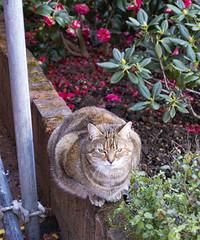 Cat, Southdown Crescent, Newbury Park