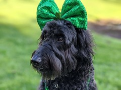 Happy St. Patrick's Day from Benni and Me