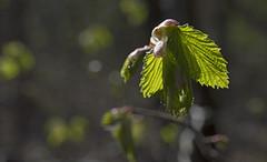 Springtime Special - Fantastic Foliage