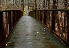 Walker Mill Regional Park Bridge