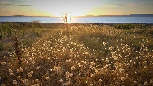 Kuranui Bay Sunset 01