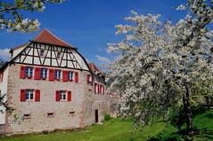 Kientzheim (Haut-Rhin, F)