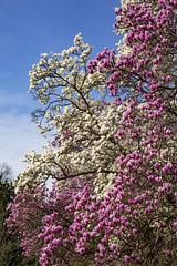 National Arboretum Sat 14 Mar 2020 (136)