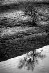 Sans feuilles au bord du Lac
