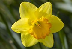 National Arboretum Sat 14 Mar 2020 (355)