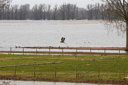 Overstroming zaterdag 14 maart