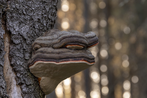 Metsän ilme, IKs Kuukausi kilpailu