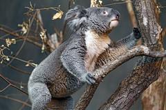 Climbing on the tree