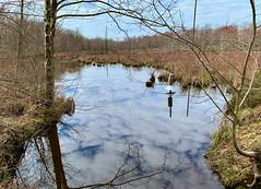 Cheltenham Wetlands Park