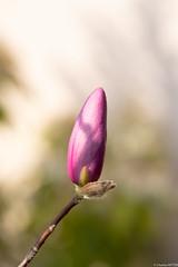 Fleurs terrasse confinement