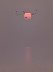 Sylt - Abendstimmung - Sunset