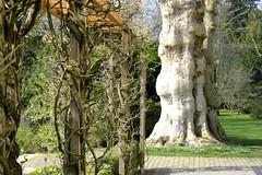 Im Botanischen Garten, Original