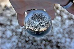 The tree in the crystal sphere