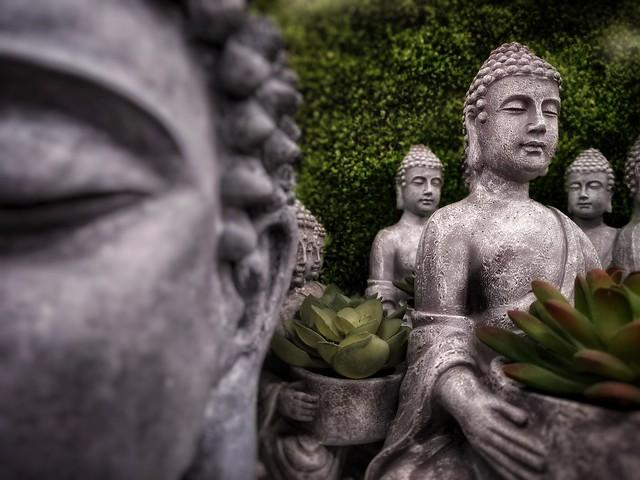 Bank of Buddha