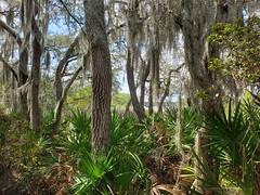 Alafia Scrub Nature Preserve
