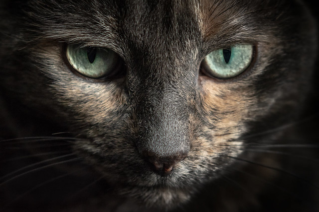 Le regard perçant