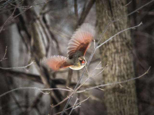 Le vol de madame Cardinal